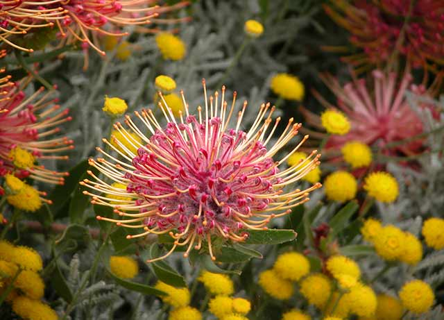 Hahei-Flowers